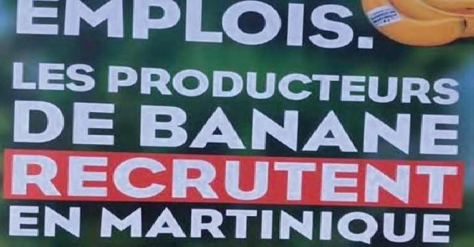 Opération séduction pour le secteur de la banane